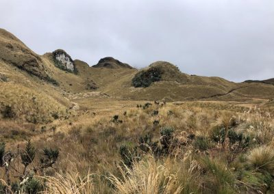 Alpine_tundra_grassy_hills